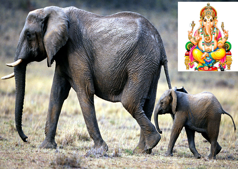 Sanskrit Of The Vedas Vs Modern Sanskrit: Animals Those Are Sacred To Hindu