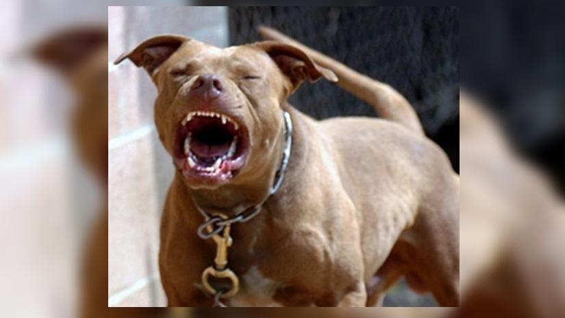 Most Dangerous Dogs Breeds