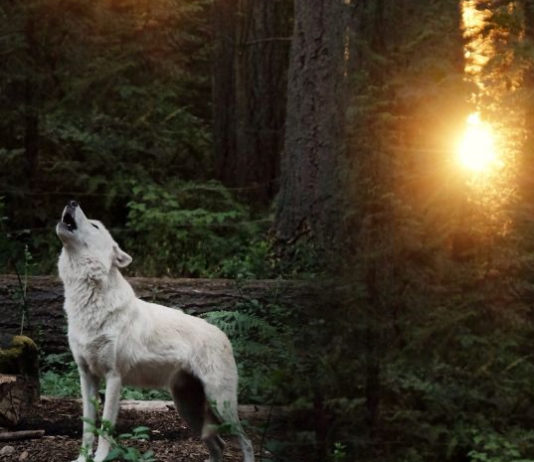 let-the-wild-animal-remain-wild