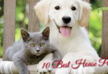 10-Best-House-Pets