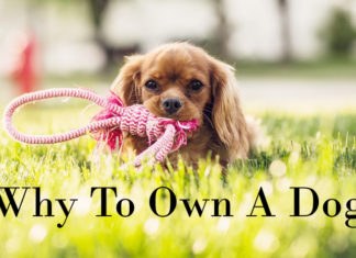 why-to-own-a-dog