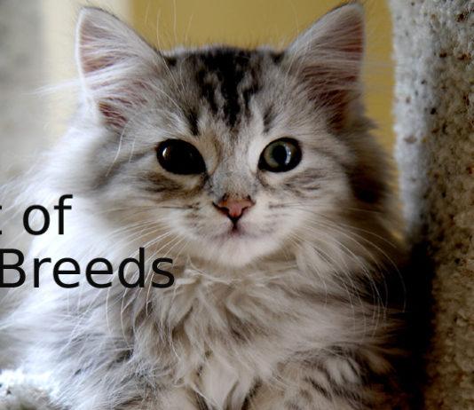 Best-of-Cat-Breeds