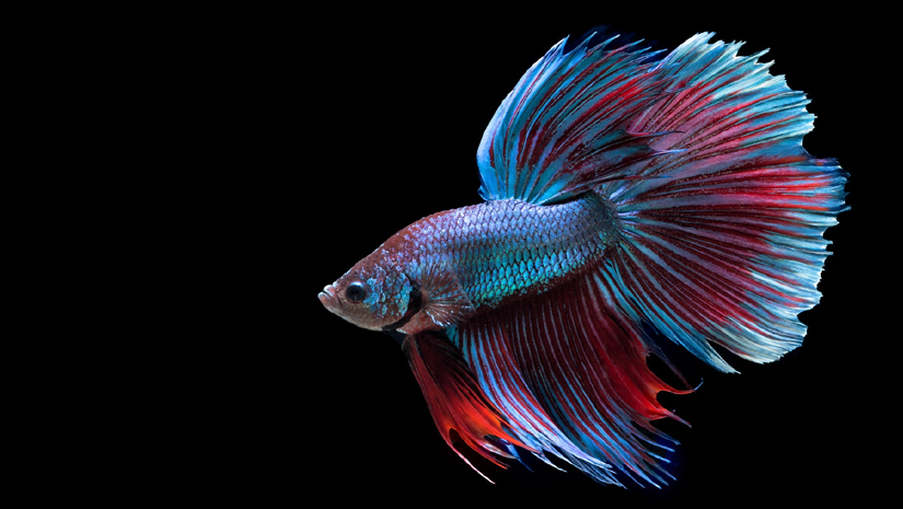 5 best pets for kids for Best fish to have as pets