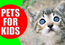 pets-for-kids