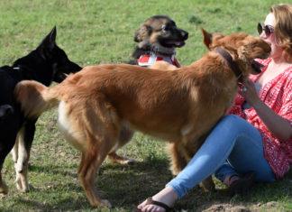 Dogs-Are-Man-Best-Friend